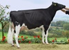 Mox Shottle RAYA 2Y